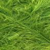 Eyelash Bright Green